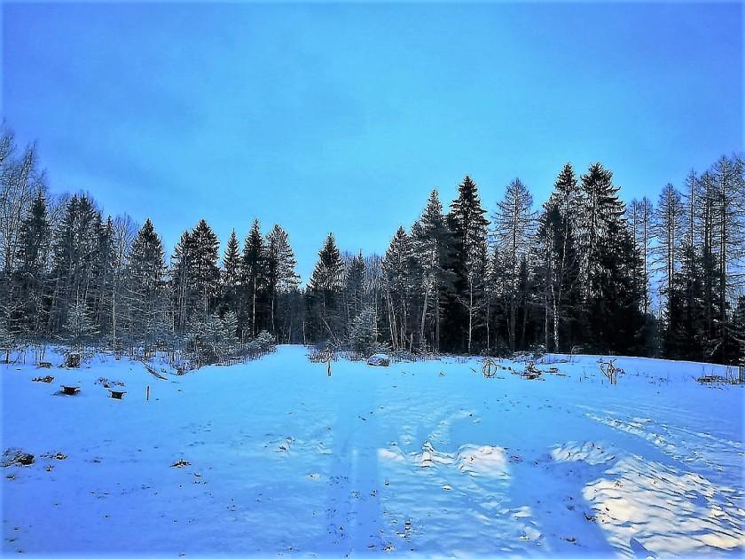 talvi tontilla 1